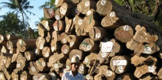 Timber Teak Myanmar