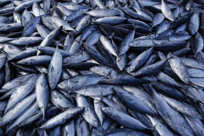 Fish marine