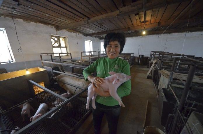China russia farmer pig farming
