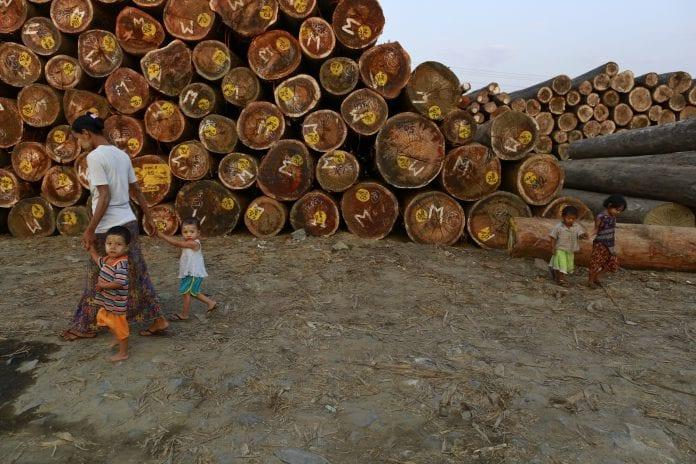 Myanmar logging economy