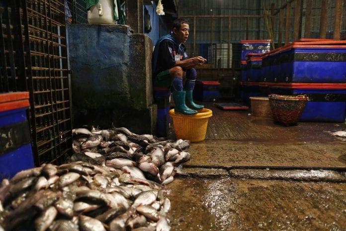 Myanmar marine fish export