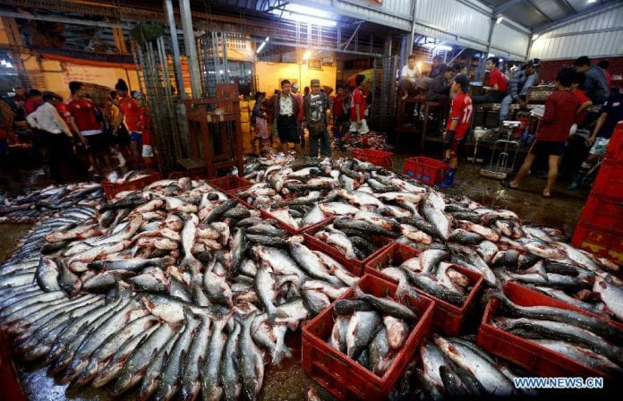 Myanmar fish 5