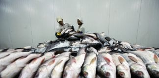 Myanmar marine products fish