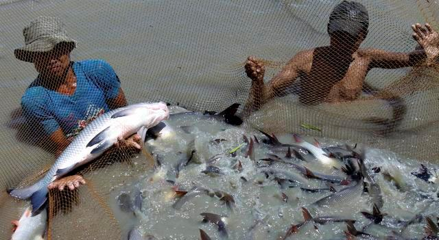 myanmar-fish-market-2009-9-22-2-41-4