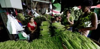 Myanmar mango fruit vegetable exports port labour labor economy investment business yangon local (4)