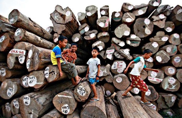 myanmar logging