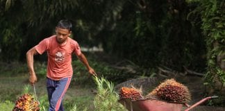 palm oil myanmar