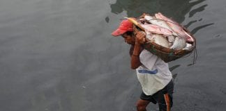 Myanmar Rakhine fish labour farmers agri export (1)