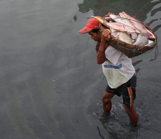 Myanmar Rakhine fish labour farmers agri export (1)