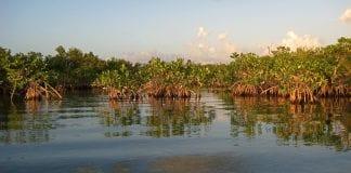 mangrove forest myanmar