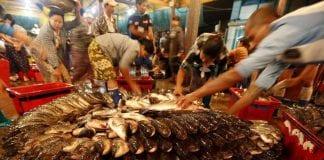 Myanmar fish 6