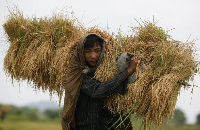 Reuters - paddy