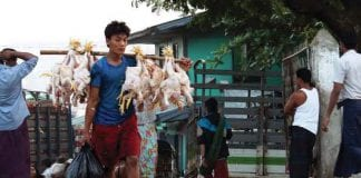 poultry chicken yangon myanmar business today