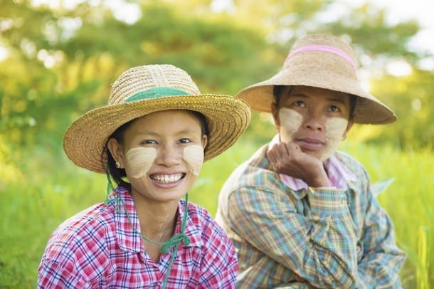 stray myanmar