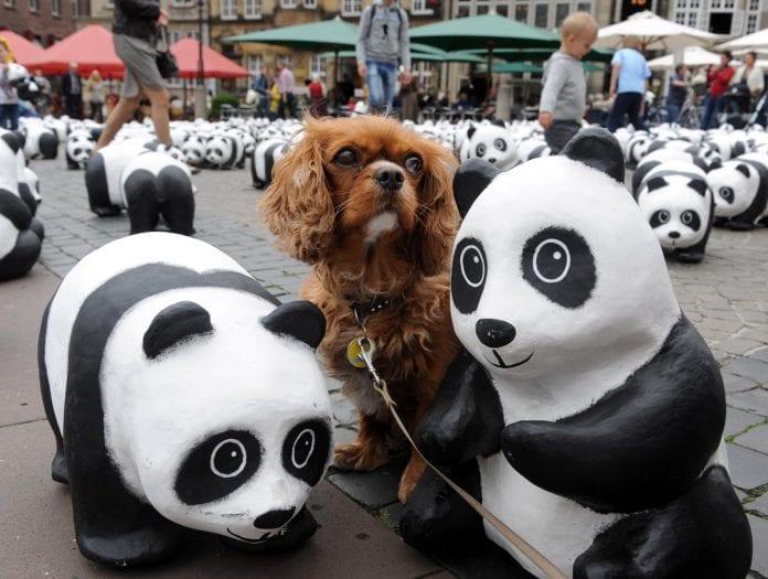 wwf panda dog wildlife foundation