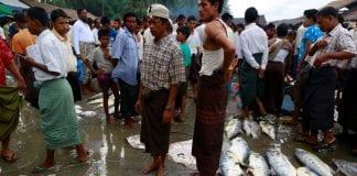 Myanmar Rakhine fish labour farmers agri export (4)