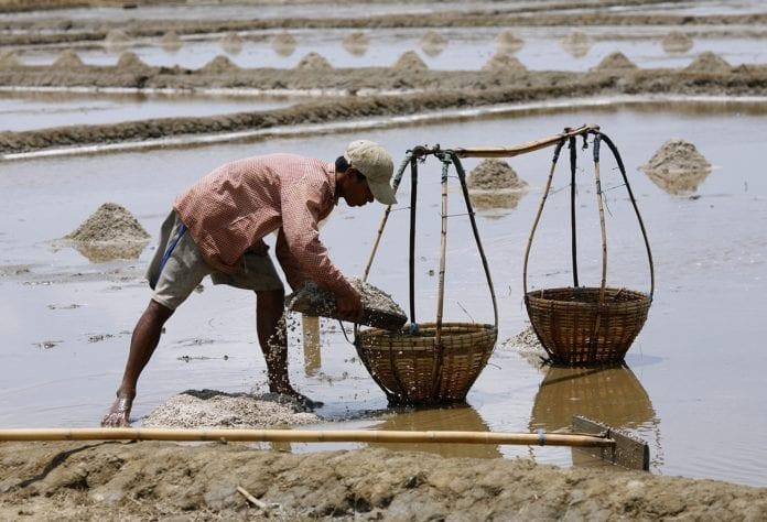 salt farmer labutta myanmar (2)