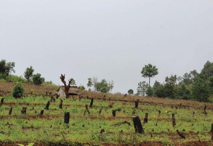 wood timber shan state logging