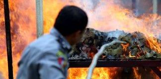 Myanmar Drug destruction poppy heroin marijuana police (4)