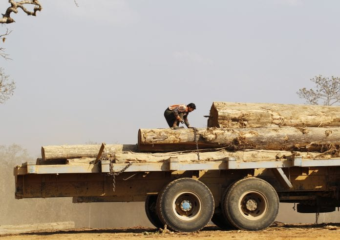 Myanmar log wood timber logging illegal labour saw mill (6)