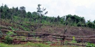 forest logging deforestation tree