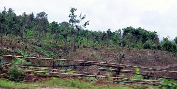 forest logging deforestation tree
