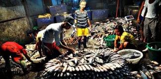 myanmar fish labor