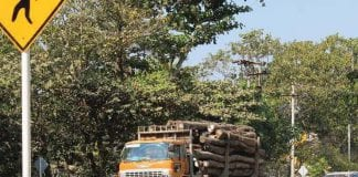 timber log wood saw truck economy trade logging