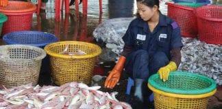 fish fisheries marine shrimp myanmar export