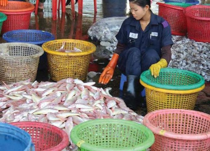 fish fisheries marine shrimp myanmar export