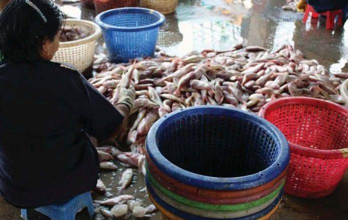 fish marine export