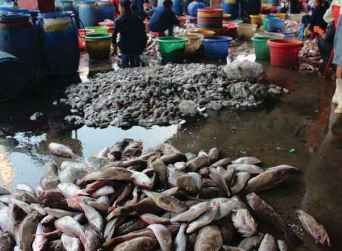 fish marine myanmar business today