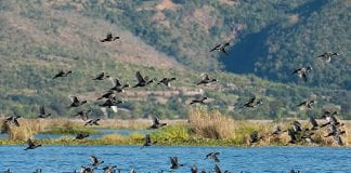15Inlay-Lake_birds-picture-Photo-2