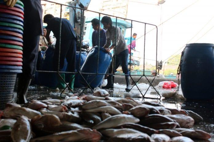 Fish marine export fishery
