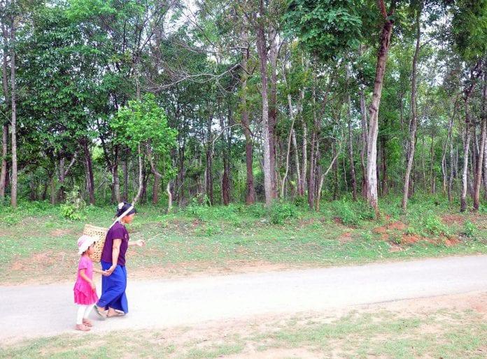 forest myanmar shan state moecaf timber logging
