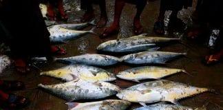 rakhine fish marine Myanmar