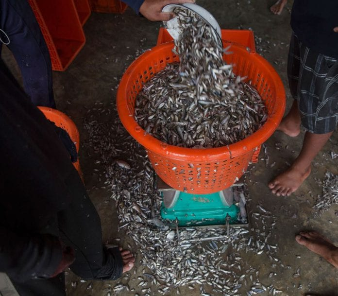 fish marine export Myanmar (2)