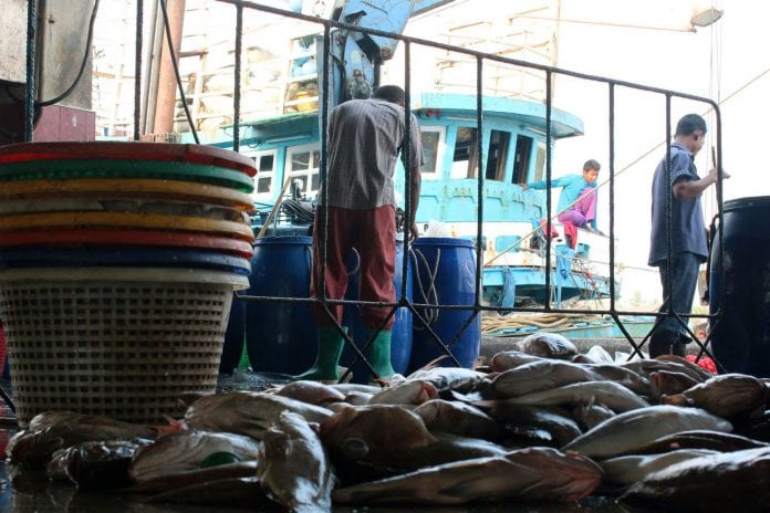 fish marine export Myanmar